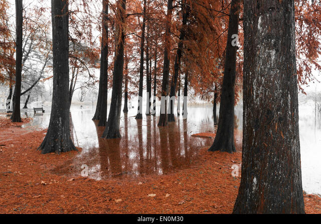 Lake of Varese overflow in the public park Zanzi, Schiranna - Stock Image