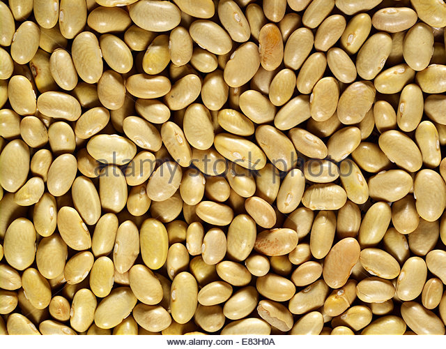 A bed of Vegetarian, Plant Based & Organic White Beans Shot as textures as backgrounds - Stock Image