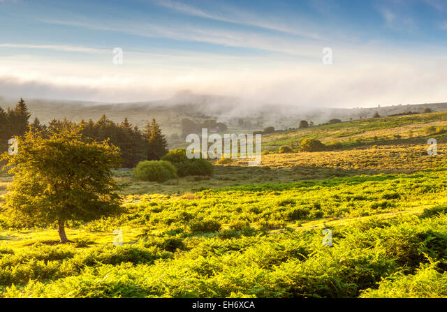 Dartmoor National Park, Holwell, Devon, England, United Kingdom, Europe - Stock Image