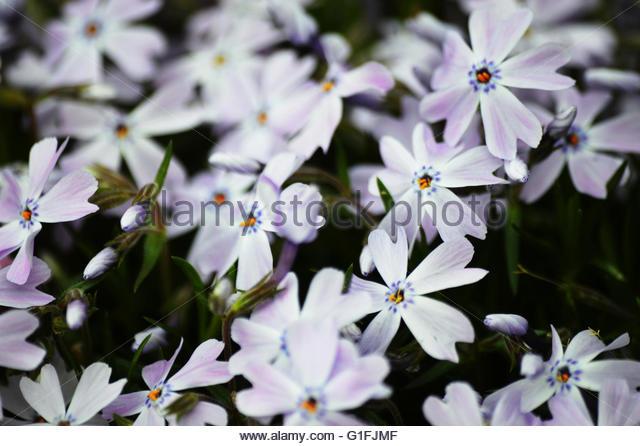 a-bed-of-flowers-g1fjmf.jpg