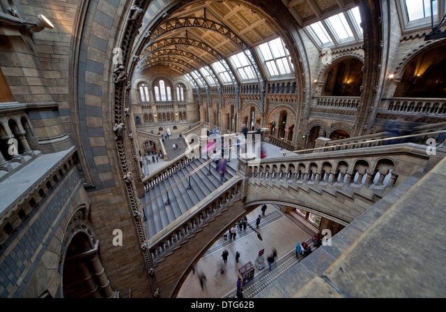 Central Hall, The Natural History Museum - Stock Image