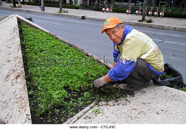 Mexico City Mexico DF D.F. Distrito Federal Paseo de la Reforma Hispanic man middle age landscape maintenance worker - Stock Image