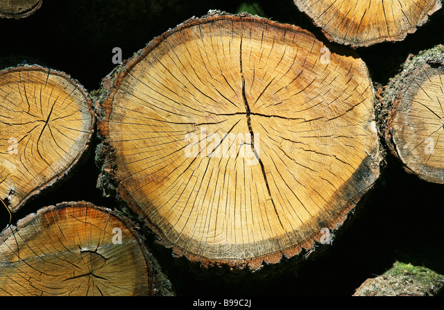 Firewood, extreme close-up - Stock Image