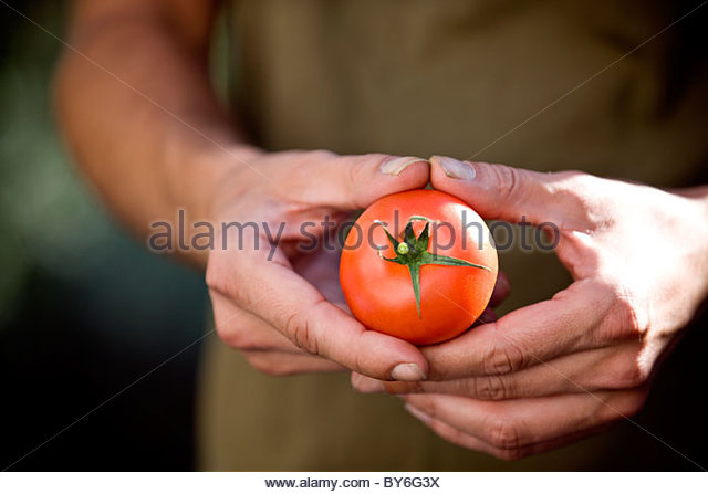 A man holding a tomato, close-up - Stock Image