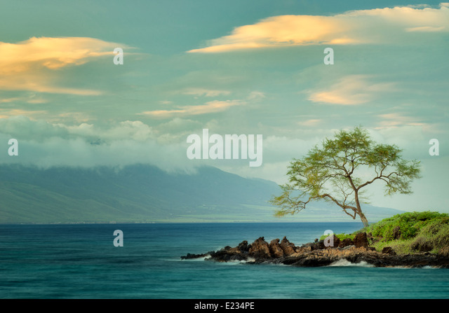 Lone tree and ocean at sunset. Maui, Hawaii - Stock Image