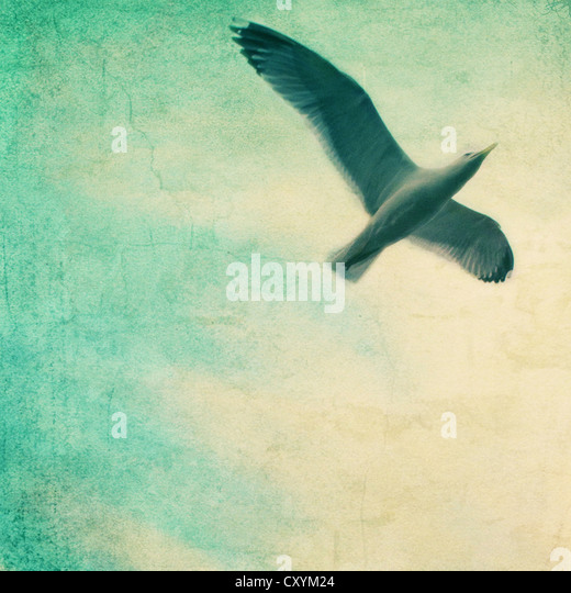 close-up of a gull flying in a textured sky - Stock Image