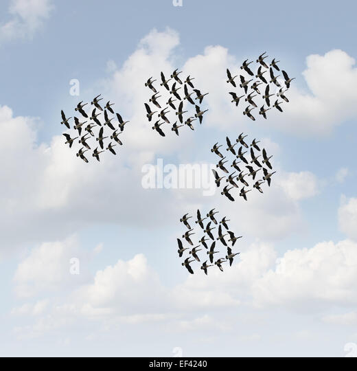Mobile network and communication concept as groups of organized teams of flying geese flock moving together as a - Stock Image