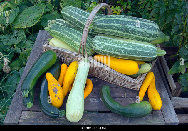A display of mixed squashes for sale in Autumn - Stock-Bilder
