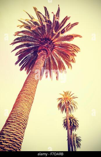 Vintage toned palm trees at sunset, holiday background, Santa Monica, USA. - Stock-Bilder