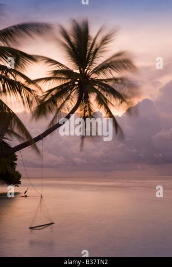 Rope swing at dusk on South Ari Atoll in Maldives near India - Stock-Bilder