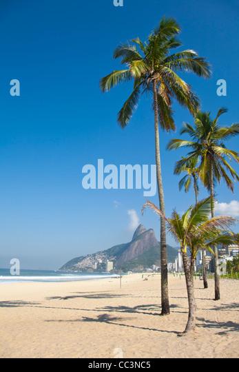 Brazil, Rio De Janeiro, Palm trees on Leblon beach - Stock Image