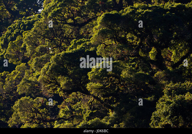 Cloudforest in La Amistad National Park, Chiriqui province, Republic of Panama. - Stock-Bilder