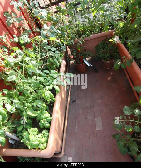 Roof Top Garden Terrace Garden Kitchen Garden Vegetable: Vegetable Garden Terrace Stock Photos & Vegetable Garden