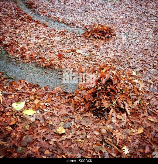 Skid marks in wet leaves - Stock Image