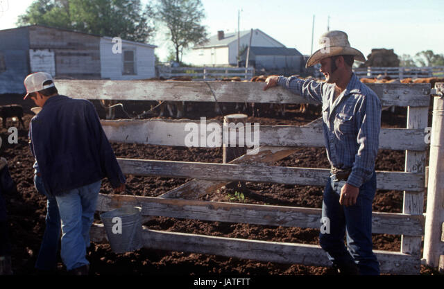 Cowboys on a ranch in Stapleton Ohio opening the gate to feed the calves - Stock Image