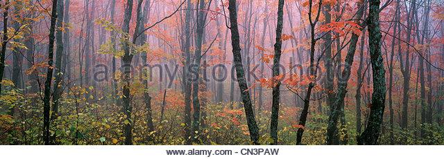 North woods, Minnesota - Stock Image