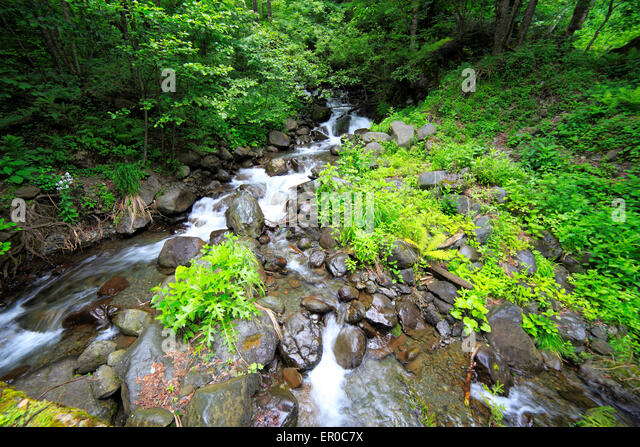 River in Caucasus mountains lake Ritsa, Abkhazia, Georgia - Stock Image