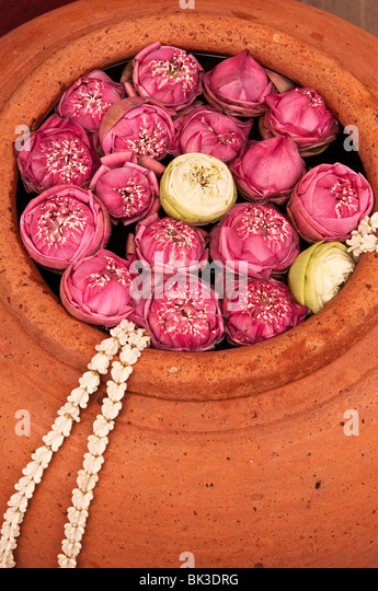 Lotus blossoms in terracotta pot at Siam Niramit; Bangkok, Thailand. - Stock Image