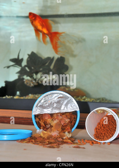 how to make fish food for goldfish