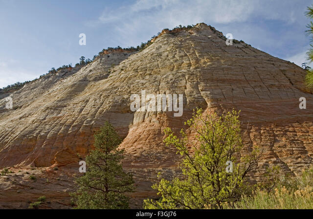 Checkerboard mesa prominent naturally sculpted art fractures Zion canyon national park ; U.S.A. - Stock Image