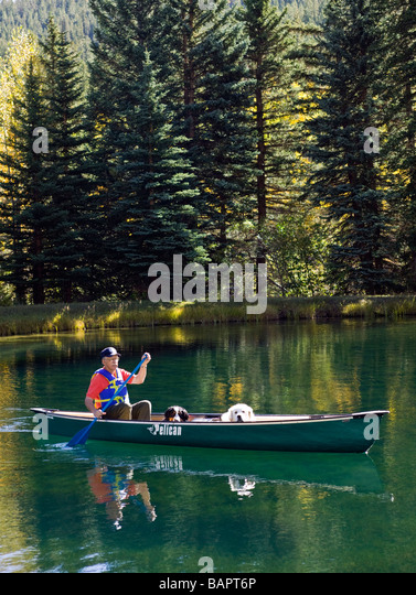 60 ish man paddling a canoe with his emotional support dogs including a Bernese Mountain Dog and a Great Pyrenees - Stock Image
