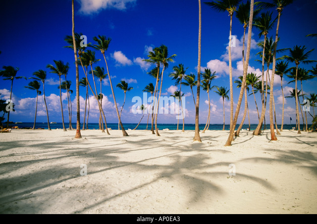 Grove Of Palm Trees In The White Sand Of A Dominican Republic Beach Punta Cana Against A Backdrop Of A Bright Blue - Stock Image
