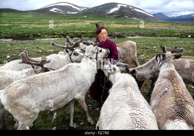 Mongolia Tsaatan nomads - reindeer people -  tribe -  people living with reindeer in Mongolia,  Central Asia - Stock Image
