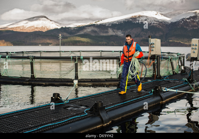 Worker at salmon farm in rural lake - Stock Image