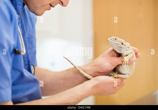 how to become a vet surgeon