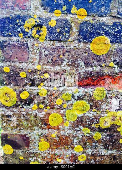 Lichen colorful - Stock Image