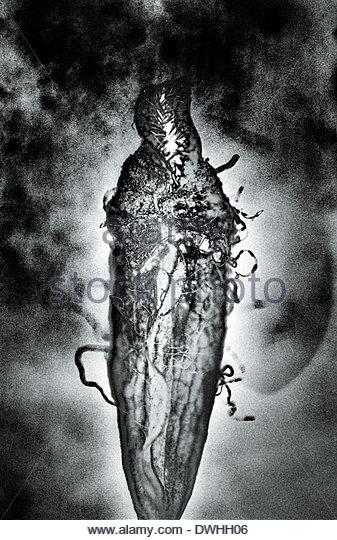 Close up detail of a carnivorous plant, London, England, United Kingdom. - Stock Image