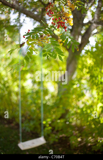 Tree swing in backyard - Stock Image