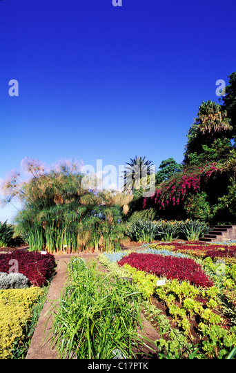 Portugal, Madeira Island, Botanical garden of Funchal - Stock Image