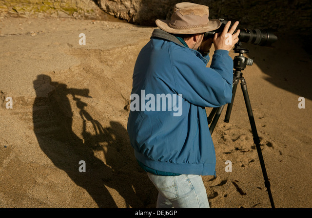 National Geographic Photographer Frans Lanting at work on the coast of California, United States. - Stock Image