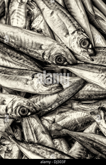 Fish Market Fishing Industry Fish Sardine Seafood Market Saltwater Fish Stack Sea In A Row Backgrounds Animals And - Stock Image