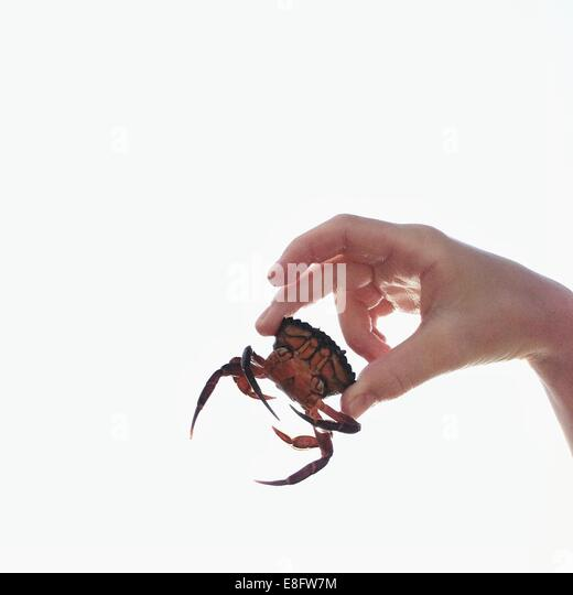 Close up of hand holding small crab - Stock Image