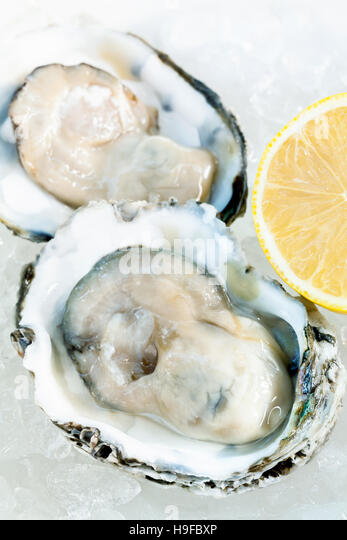 Fresh oysters for  appetizer . - Stock-Bilder