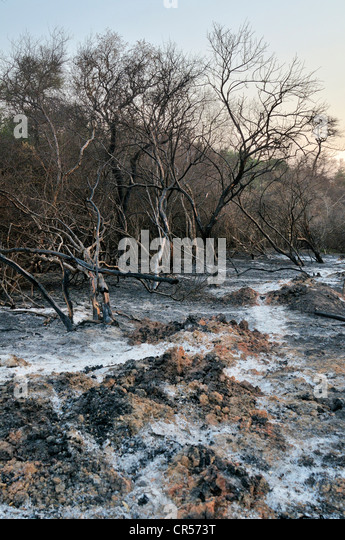 Scorched earth, deforestation through slash-and-burn for the reclamation of arable land by large landowners, Gran - Stock Image