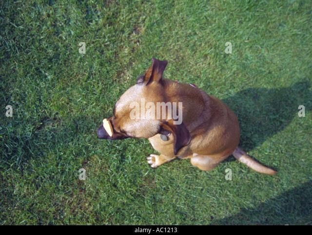 Australia Book The Dog Fence