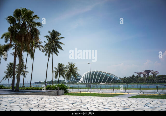 Palm threes and concourse opposite the Gardens by the Bay in Singapore - Stock-Bilder