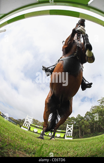 Horse Jumping Hurdle, Directly Below - Stock Image