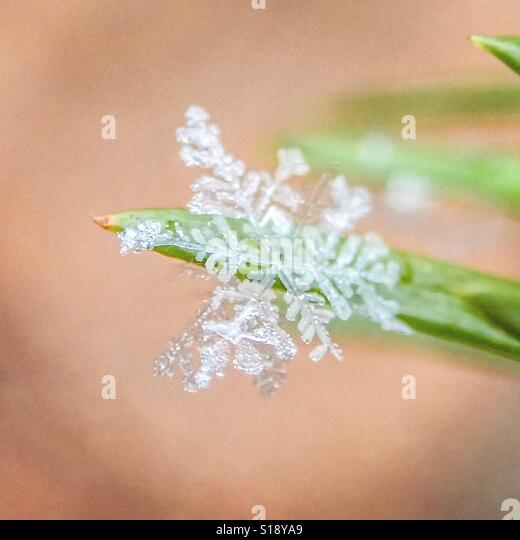snow flake, Gyeongju, Korea - Stock-Bilder