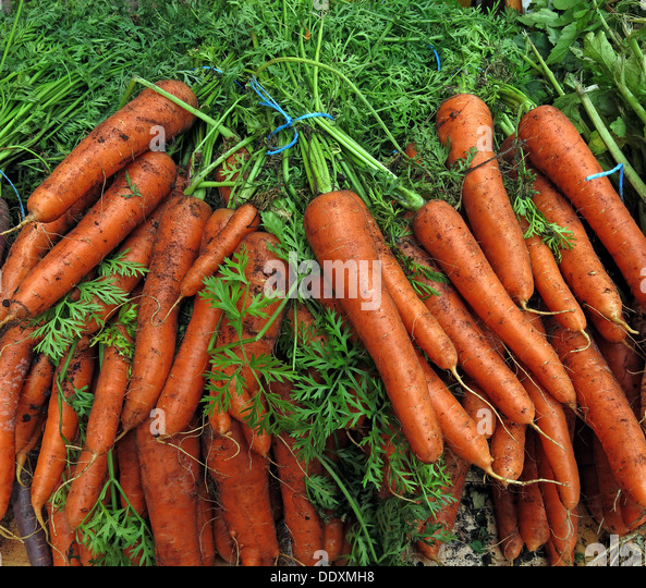 Organic Carrots with leaves at farmers market, Warrington, Cheshire, England, UK - Stock Image