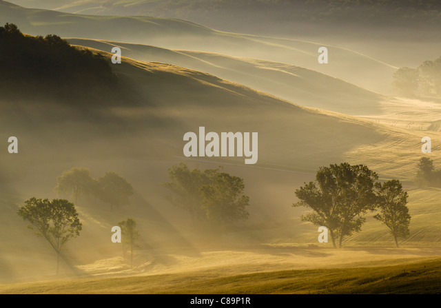 Italy, Tuscany, Crete, View of trees and fog in morning - Stock-Bilder