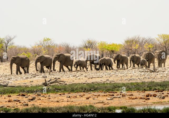 elephants line stock photos amp elephants line stock images
