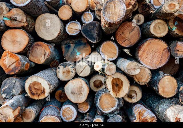 Logging - Pisgah National Forest, near Brevard, North Carolina, USA - Stock Image