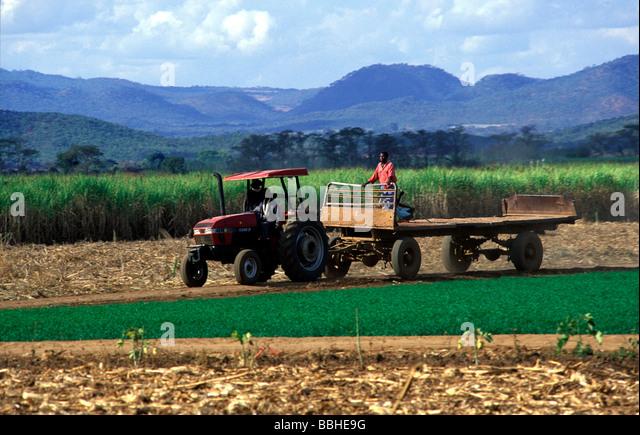 maize farming in nigeria pdf