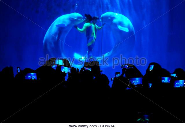 Harbin, China. 13th July, 2016. The white whales show their stunts guide by trainers at a local polar museum in - Stock Image