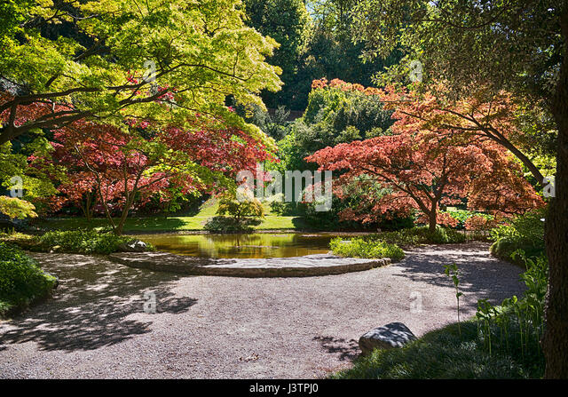 Japanese botanical garden with small pond and many varieties of trees illuminated by the Sun - Stock Image