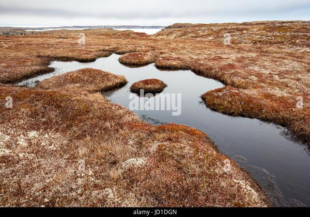Barren grassy landscape at Spillars Cove, near Bonavista, Cape Bonavista Peninsula, Newfoundland, Canada - Stock Image